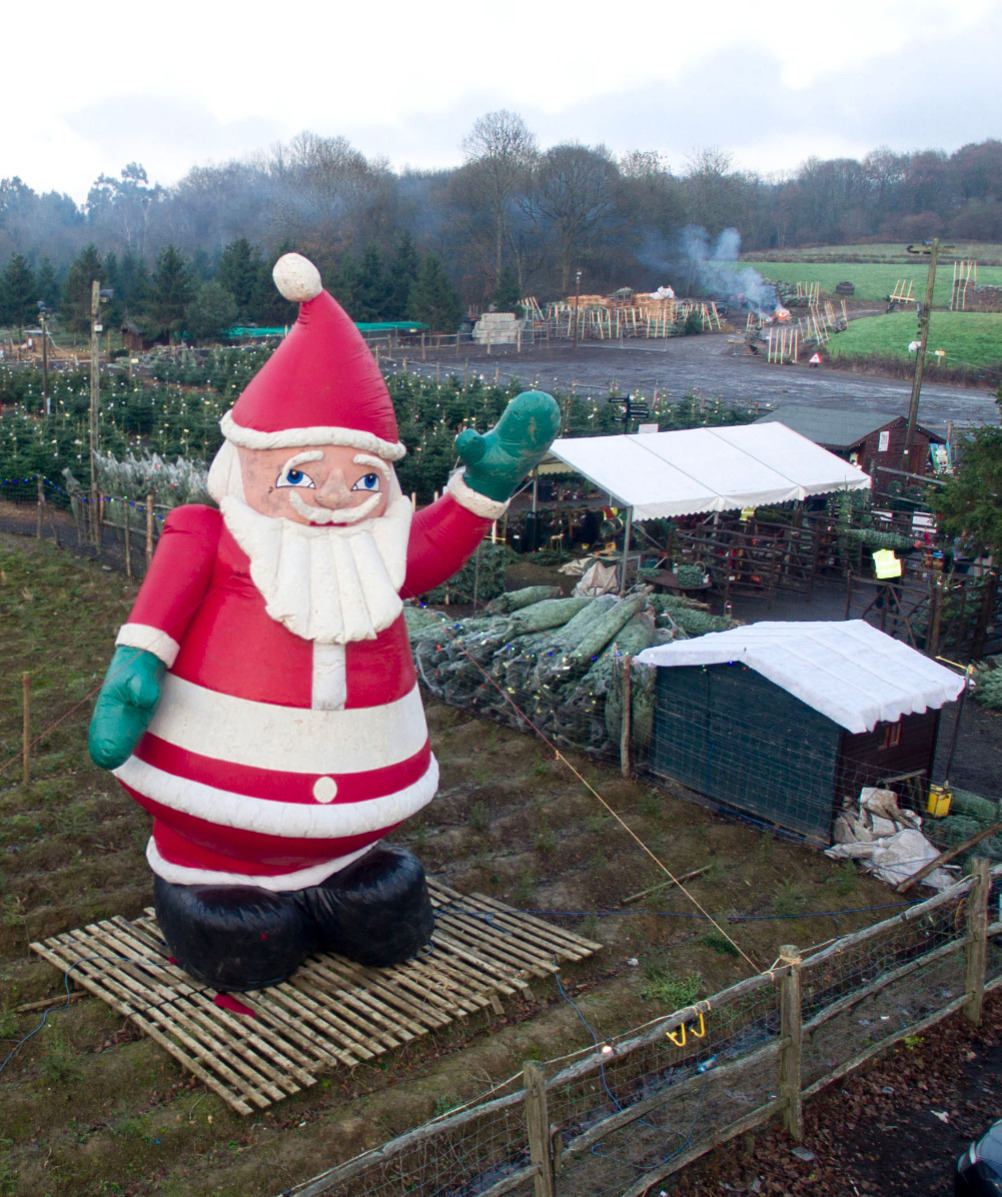 Santa Fir Christmas Tree Farm | Guildford, Surrey | Sussex London